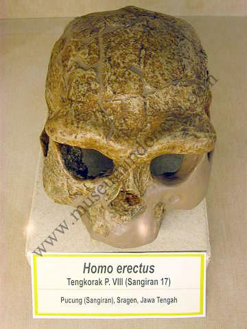 Museumindonesia Com Museum Geologi